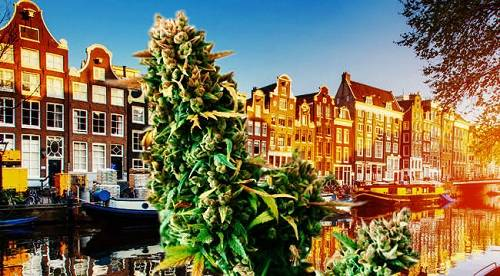 Key Facts About Barcelona Cannabis Clubs