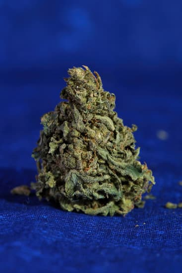 ACDC High Cannabis Strain