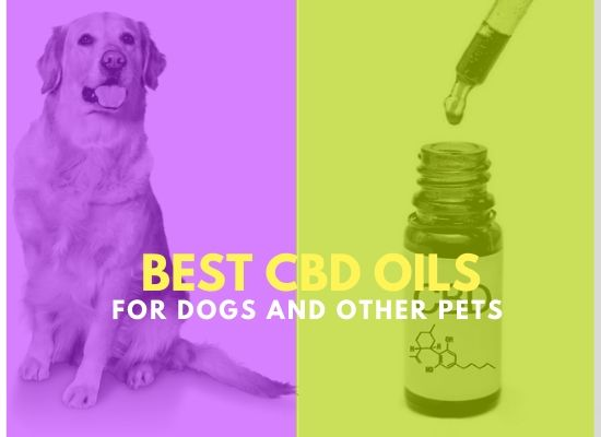 CBD Oils For Dogs And Other Pets