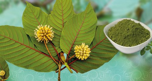 Is Kratom Bad For Your Health Is Taking Kratom Safe