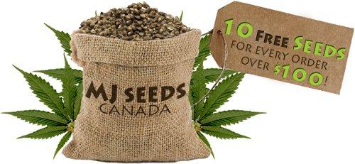 Marijuana Seeds in Canada Legal