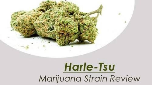 Reviews Of The Harle-Tsu Cannabis