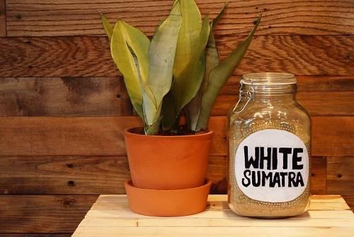 White Sumatra Review