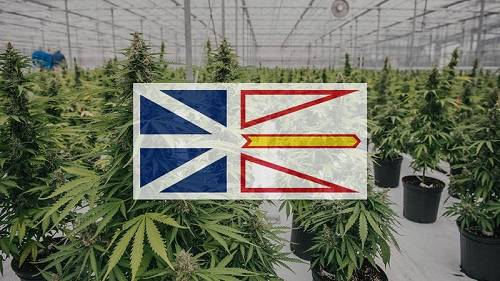 CBD Oil In Newfoundland And Labrador