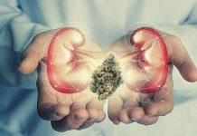 Efects of CBD on Kidneys