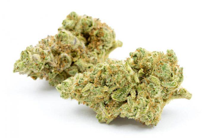 Jungle Cake Marijuana Strain
