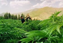 Cannabis Vacations
