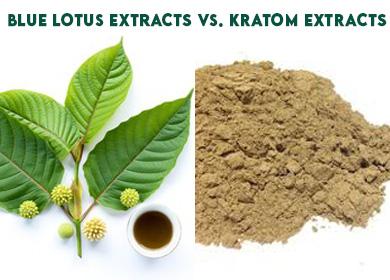 Blue Lotus Extracts Vs. Kratom Extracts